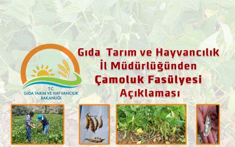 Gıda  Tarım ve Hayvancılık il Müdürlüğünden Çamoluk Fasülyesi Açıklaması