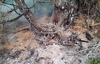 Sarpkaya'da Orman Yangını