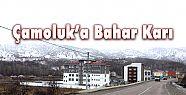 ÇAMOLUK'A BAHAR KARI