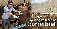 Hayvan Aşı ve Küpeleme çalışmaları...
