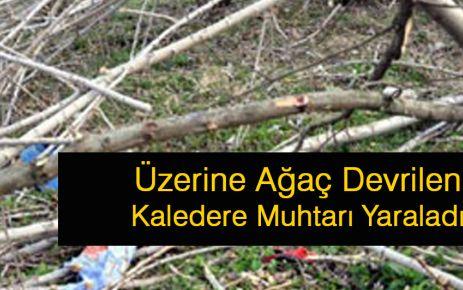 Üzerine Ağaç Düşen Kaledere Muhtarı Yaralandı