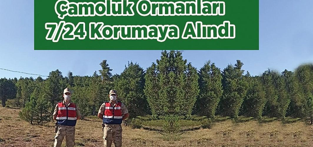 Çamoluk Ormanları Koruma Altında