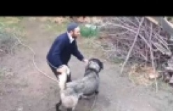 Kutluca Köyünde Köpek Kavgası