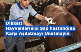 Dikkat! Hayvanlarınızı Şap hastalığı İçin...