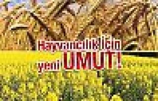 Çamoluk'ta hayvancılığa destek çalışması YEMCİLİK