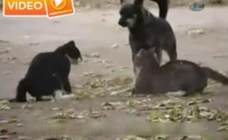 Kavga eden kedileri köpek ayırdı - Video