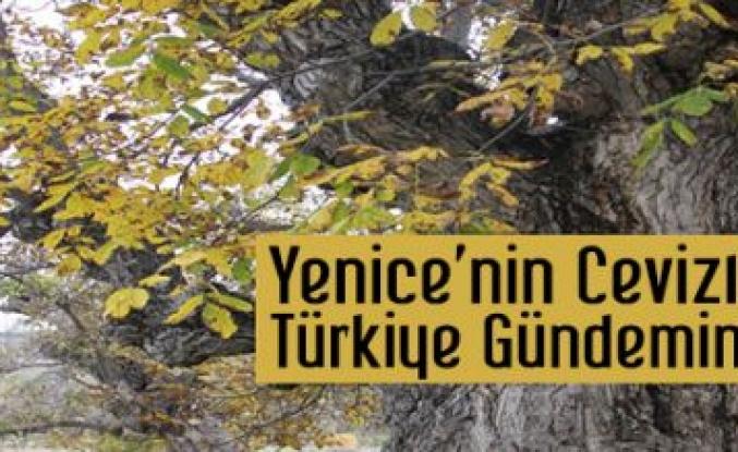 Yenice'nin Cevizleri Türkiye'nin Gündeminde