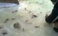 Balık Fıskiyesi Görüntüsü Rekor Kırıyor