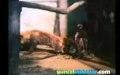 Kartal ile Tilki'nin ölümüne mücadelesi