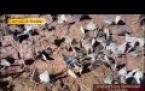 Kutluca Köyü yaylasından Kelebekler